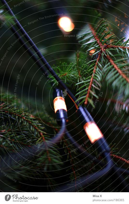 Christbaum Feste & Feiern Natur Winter Pflanze Baum Garten hell Kitsch Licht Farbfoto mehrfarbig Außenaufnahme Innenaufnahme Menschenleer Textfreiraum links