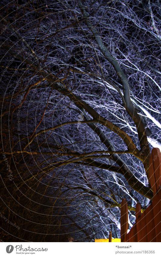 zauberwald Natur Baum blau Wald dunkel Herbst Holz Stimmung braun Beleuchtung Kunst fantastisch geheimnisvoll natürlich außergewöhnlich