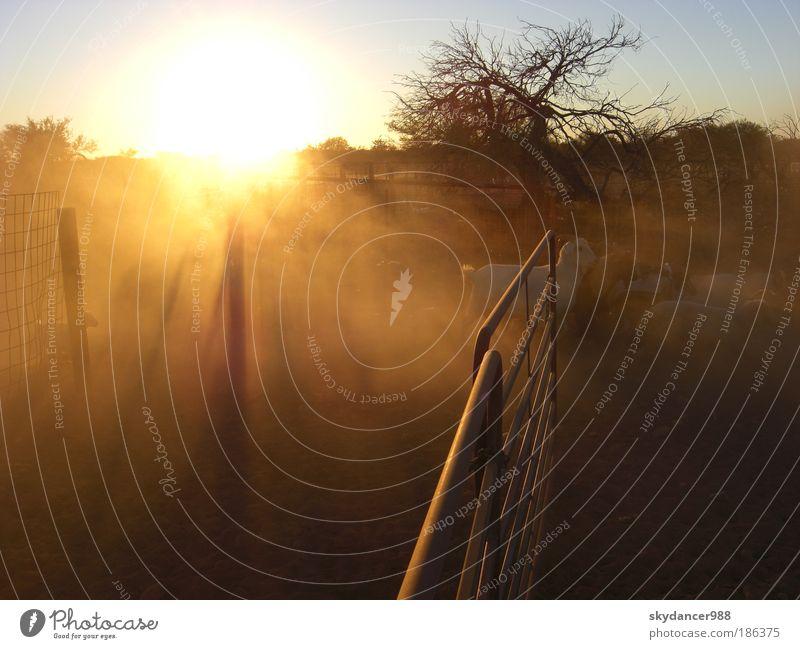 Impression of Down Under Beruf Farmer - Schafszüchter - Schafszucht - Zucht Arbeitsplatz Wüste - Desert  - Farm - Outback - Gehege Umwelt Natur Landschaft Erde
