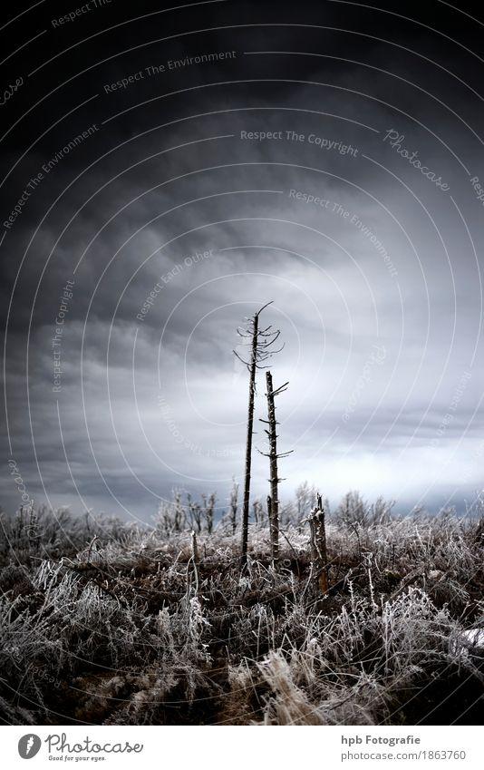 Hohe Rhön Himmel Natur blau schön Baum Landschaft Winter Wald Berge u. Gebirge kalt Gefühle Schnee Tod außergewöhnlich Freiheit braun