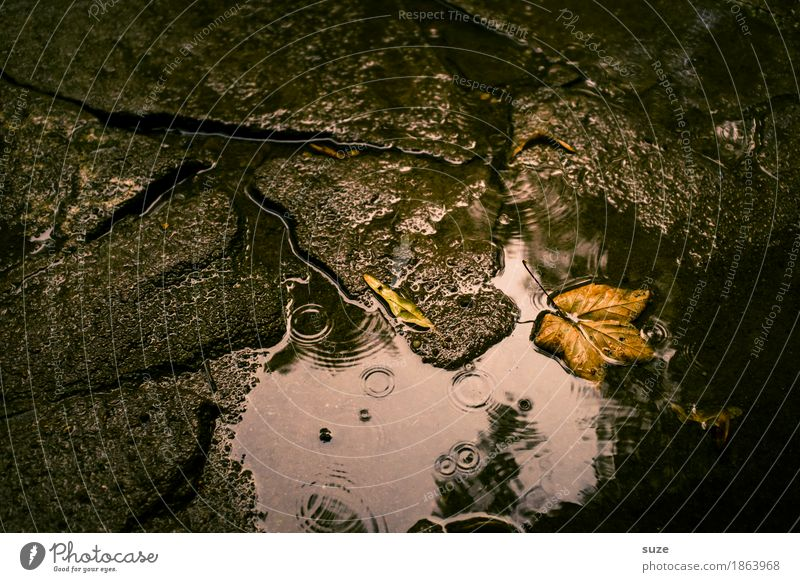 November im August Natur alt schön Wasser Blatt dunkel Traurigkeit Herbst natürlich Zeit braun Wetter ästhetisch nass Vergänglichkeit Jahreszeiten