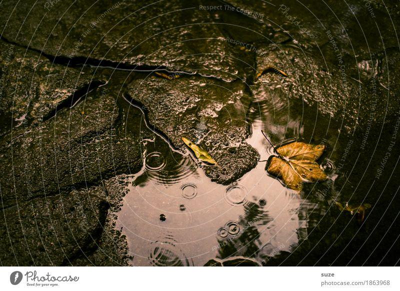 November im August Natur Wasser Herbst Wetter Blatt Traurigkeit alt ästhetisch dunkel nass natürlich braun Vergänglichkeit Zeit Herbstlaub herbstlich