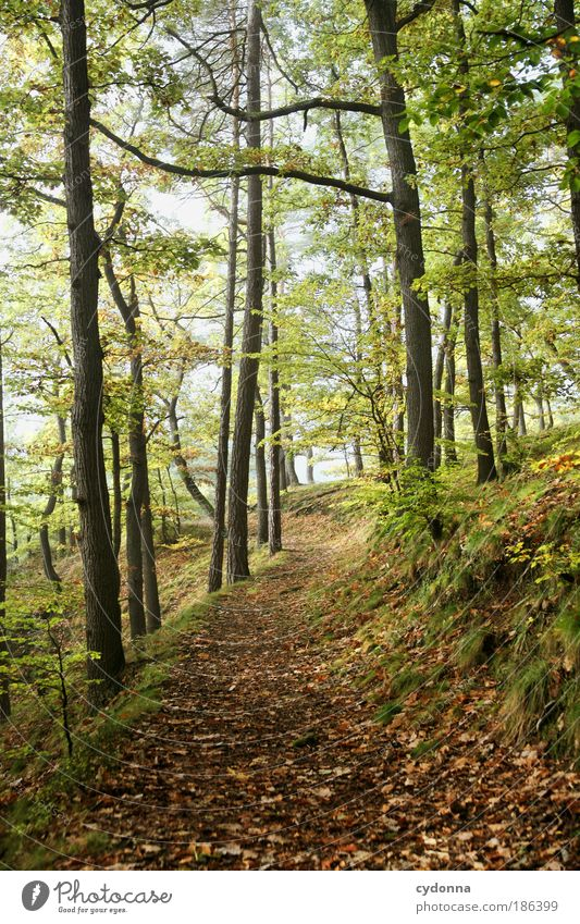 Waldweg Natur schön Baum ruhig Ferne Leben Erholung Herbst Freiheit träumen Wege & Pfade Landschaft Zufriedenheit Umwelt Zeit