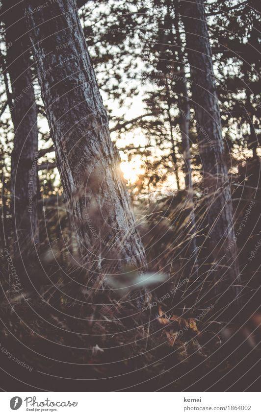 A glimpse of light Natur Pflanze schön Sonne Baum Landschaft Einsamkeit ruhig dunkel Wald Umwelt Wärme Herbst Gras Freiheit Stimmung