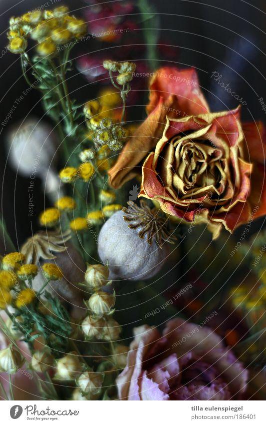 blümerant Blume Rose Blumenstrauß verblüht dehydrieren dunkel natürlich mehrfarbig Farbe Natur Verfall Vergänglichkeit Mohn Mohnkapsel Leinen Potpourri