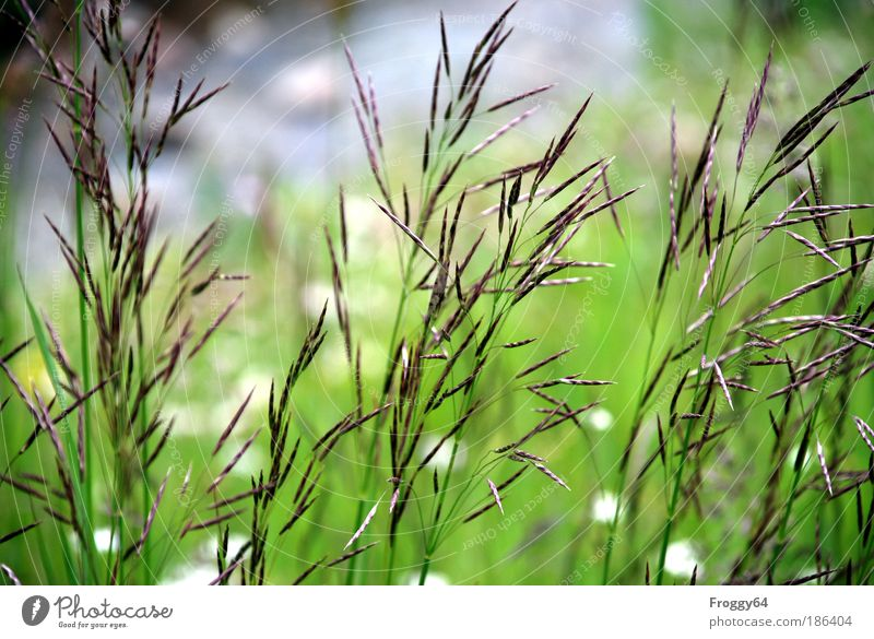 Sommerwiese Natur Ferien & Urlaub & Reisen Pflanze Sommer Sonne Landschaft Berge u. Gebirge Umwelt Leben Wiese Gras Freiheit Zufriedenheit Fröhlichkeit Ausflug Lebensfreude