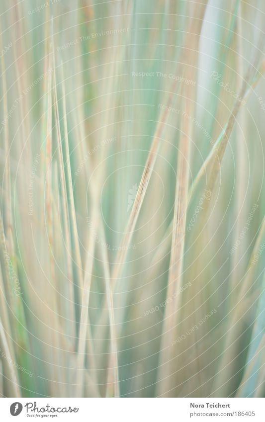 Hauchzart. Natur blau weiß schön Pflanze Sommer ruhig Umwelt Landschaft Wiese Herbst Gras träumen Park Stimmung frei