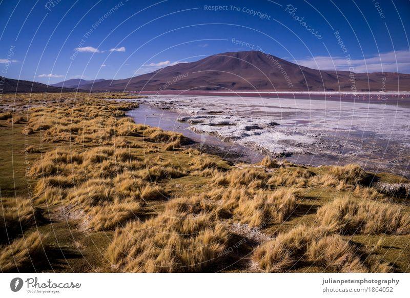 Laguna Colorada im bolivianischen Altiplano Ferien & Urlaub & Reisen Berge u. Gebirge Natur Landschaft Gras See gelb rosa rot Farbe Lagune Kolorada altiplano