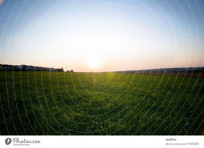 Sonnenuntergänge habens schwer schön ruhig Einsamkeit Wiese Gefühle Gras Natur Landschaft Feld Romantik Kitsch Außenaufnahme Idylle Schönes Wetter Verliebtheit