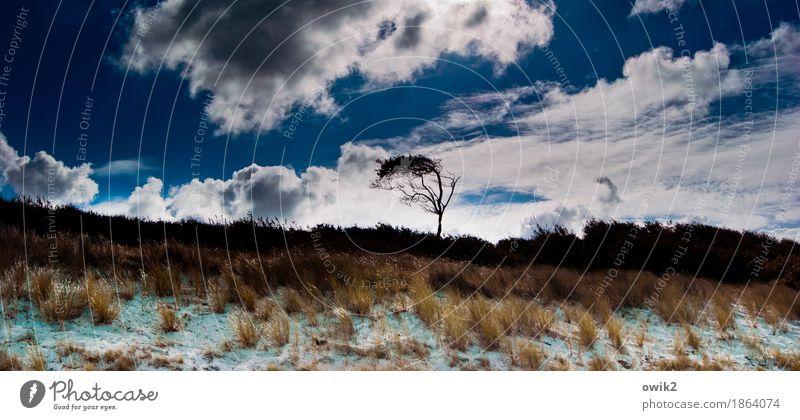 Wild und weit Umwelt Natur Landschaft Pflanze Himmel Wolken Herbst Klima Schönes Wetter Baum Gras Sträucher Strand Ostsee Weststrand Horizont Idylle Ferne Wind