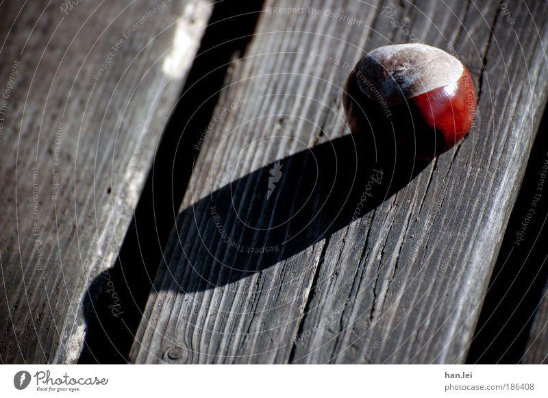 Schlagschatten Pflanze Herbst Park fallen liegen Herbstferien Bank Kastanie Holz Schatten schwarz braun rund Ball rustikal alt Farbfoto Außenaufnahme
