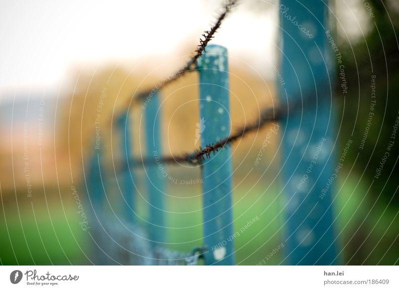 Zaun Mauer Wand Stahl Rost bauen Herbstferien Maschendrahtzaun Stacheldrahtzaun Gartenzaun Landschaft Eisen Pflanze Reihe parallel alt Tiefenschärfe blau grün