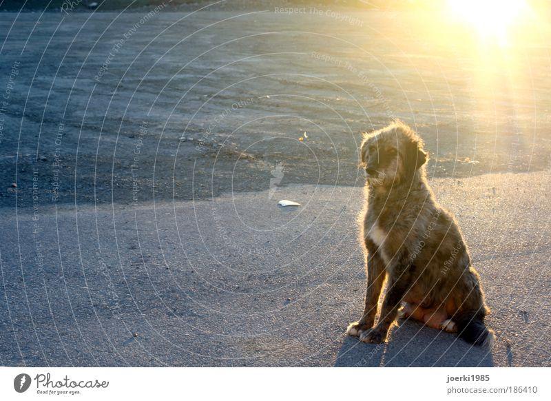 Hund Natur Sommer Ferien & Urlaub & Reisen Tier Herbst träumen Hund Sand Umwelt leuchten Haustier hocken knien