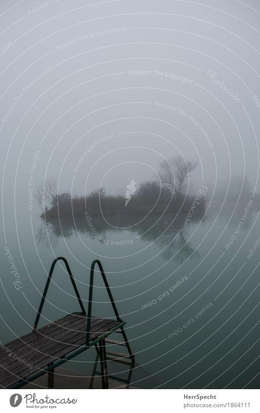 Inseltraum Ausflug Herbst Winter Baum Sträucher Seeufer Teich ästhetisch dunkel gruselig kalt natürlich grau grün Zufriedenheit Einsamkeit Endzeitstimmung