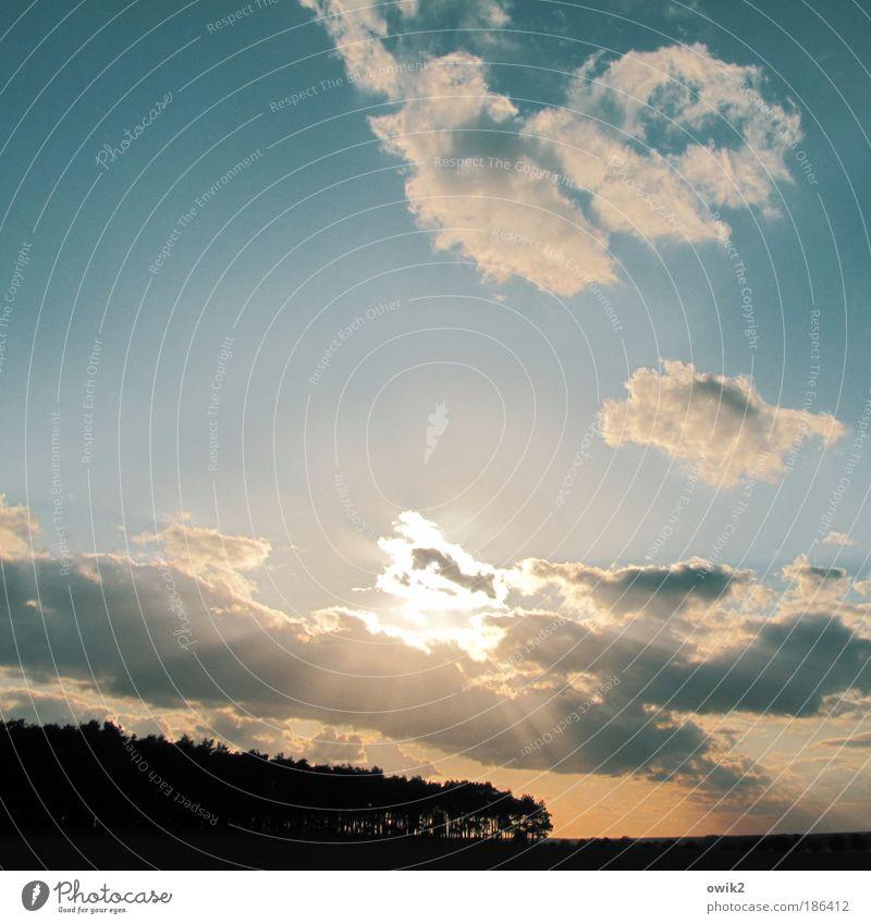 Wird Zeit Natur Himmel blau Pflanze Wolken Wald Herbst Landschaft Luft hell orange Feld glänzend Horizont Licht