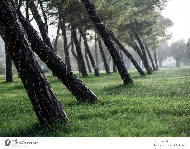 Schräglage Natur Pflanze grün Baum Landschaft ruhig Herbst natürlich Gras braun Nebel Perspektive Italien Neigung Baumstamm herbstlich