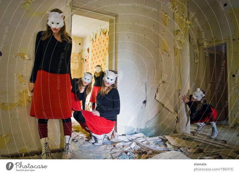 5er Wurf Katze Mensch Tier feminin Spielen Künstler Tanzen verrückt beobachten Tiergruppe Neugier Verfall Maske Haustier schäbig Theaterschauspiel