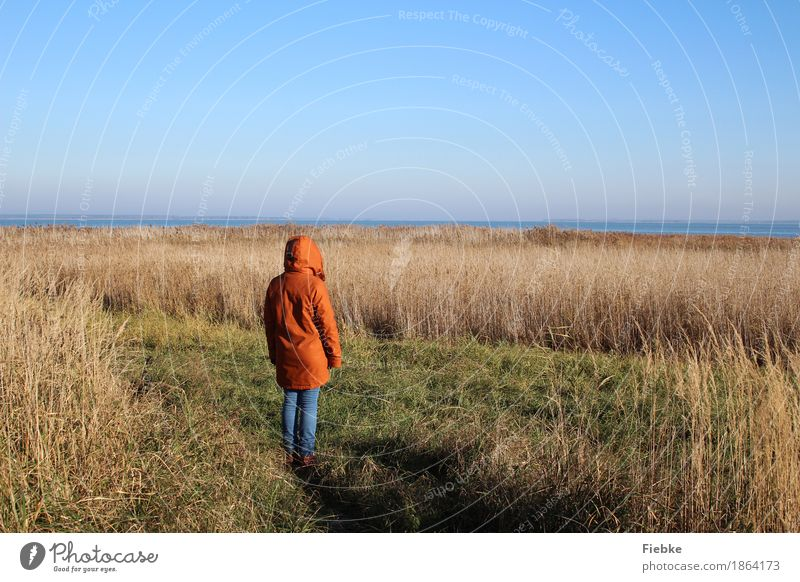 Boddenblick Mensch Natur Ferien & Urlaub & Reisen Jugendliche Junge Frau Wasser Landschaft Erholung ruhig Ferne kalt Herbst Küste feminin Freiheit Horizont