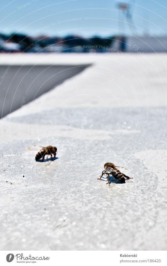 Alle Menschen sind bestechlich, sagt die Wespe zur Biene weiß blau Tier Zufriedenheit gold authentisch bedrohlich Hafen entdecken Schifffahrt Fressen Konkurrenz