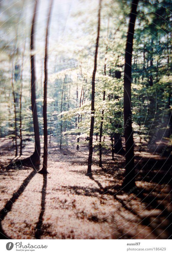 A forest Wald Weide Natur Holz Klimawandel Brennholz Beruf Abholzung Klimaschutz Förster Saurer Regen
