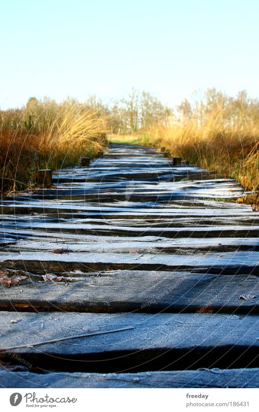 ::: Holzweg ::: ruhig Einsamkeit kalt Gras Wege & Pfade See Landschaft gehen Wetter Umwelt Brücke Frost Sträucher Spaziergang Natur Steg