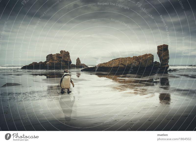 Kleiner Mann was nun Himmel Wasser weiß Meer Landschaft Wolken Tier Strand dunkel Küste grau braun Felsen Horizont Wetter Wellen