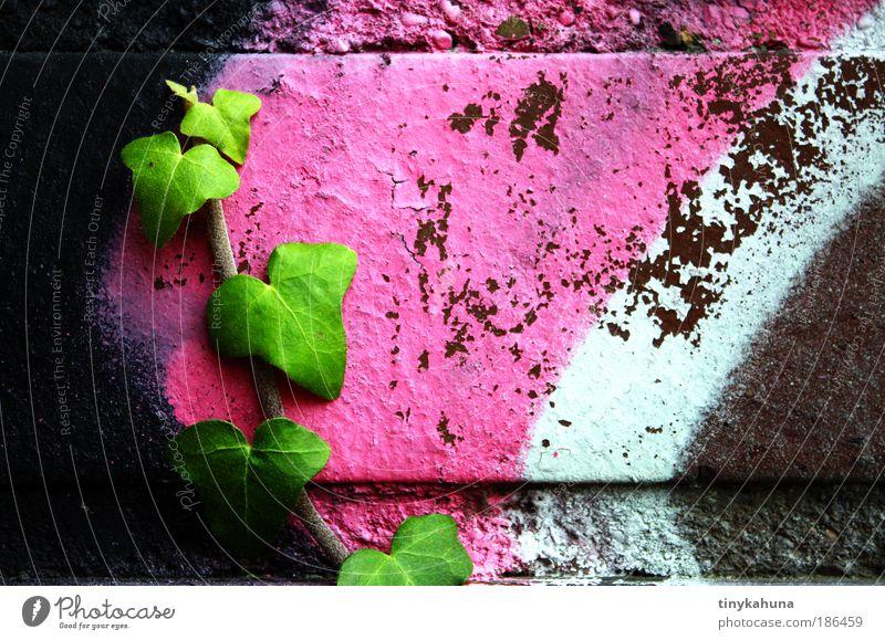 Efeu auf Graffiti Jugendkultur Subkultur Pflanze Mauer Wand rebellisch grün rosa schwarz weiß Willensstärke Farbfoto Außenaufnahme Nahaufnahme