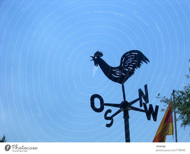 Wetterhahn Wolkenloser Himmel Wind Zeichen blau schwarz Hahn Osten Süden Norden Westen Himmelsrichtung Farbfoto Außenaufnahme Textfreiraum links Silhouette Tag