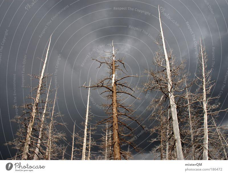 Stumme Ankläger. Natur Baum Wald dunkel Tod Umwelt Holz trist Industrie bedrohlich Vergänglichkeit Schatten Unwetter Gewitter Umweltschutz Umweltverschmutzung