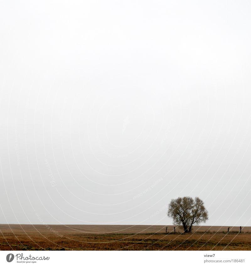 kalt. Umwelt Landschaft Himmel Wolken Wetter schlechtes Wetter Dürre Pflanze Baum Wiese Feld dunkel authentisch einfach Ferne positiv schön trist braun ruhig