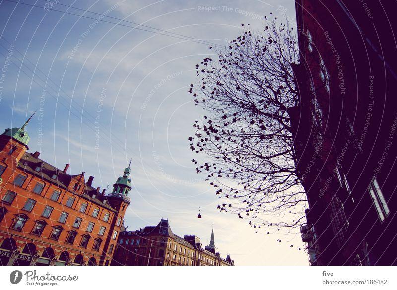 København Himmel Schönes Wetter Baum Stadt Hauptstadt Hafenstadt Haus Fenster Ferien & Urlaub & Reisen Tourismus Kopenhagen Dänemark Farbfoto Außenaufnahme