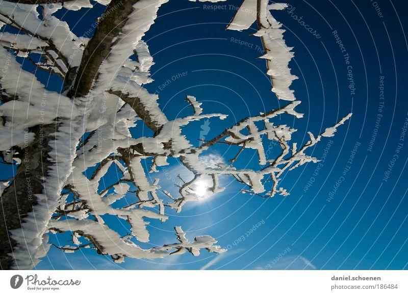 blauweiß mit Seitenwind Natur Himmel Wolkenloser Himmel Sonne Winter Klima Klimawandel Wetter Schönes Wetter Eis Frost Schnee Baum Licht Sonnenlicht