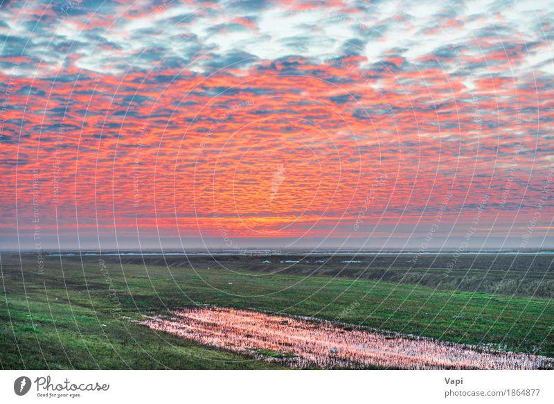 Sonnenuntergang auf dem grünen Feld Himmel Natur Ferien & Urlaub & Reisen Pflanze blau Farbe Sommer weiß Blume Landschaft rot Wolken Umwelt gelb