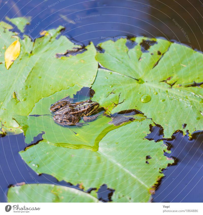 Frosch, der auf grünem Blatt sitzt - ein lizenzfreies Stock Foto von ...
