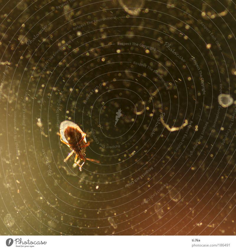 vor Weihnachten sollte ich noch unbedingt Fenster putzen rot schwarz Tier gelb Fenster Natur Sand dreckig Flügel Wildtier Schönes Wetter Käfer krabbeln Insekt Makroaufnahme