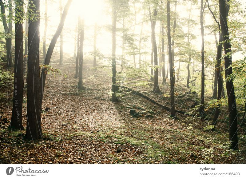 Sonne kommt ... Natur Baum ruhig Wald Leben Erholung Freiheit träumen Wege & Pfade Landschaft hell Kraft Umwelt Zeit Energie Wandel & Veränderung