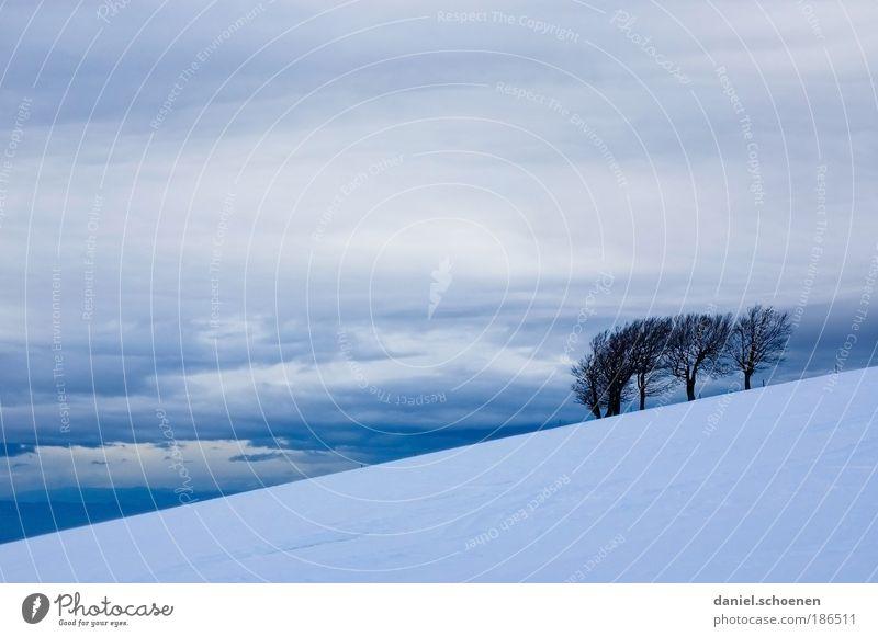 Schauinsland Landschaft Himmel Wolken Winter Klima Wetter schlechtes Wetter Wind Sturm Eis Frost Schnee Berge u. Gebirge blau grau weiß Schwarzwald Baum