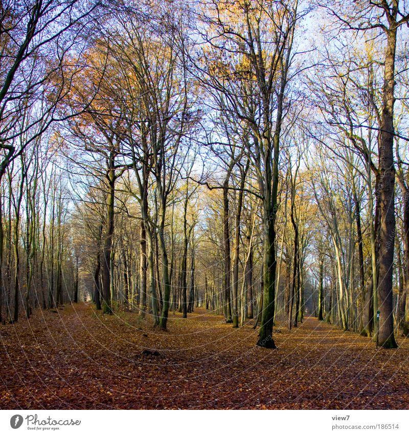 Hänsel und Gretel Natur Himmel Baum Pflanze Einsamkeit Wald Herbst träumen Umwelt Licht authentisch einfach einzigartig natürlich außergewöhnlich entdecken