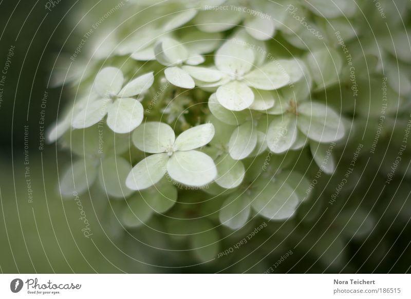 Schneeflöckchen Natur weiß schön Pflanze Blatt Umwelt Blüte weich Blütenblatt Schneeflocke Wildpflanze Balkonpflanze