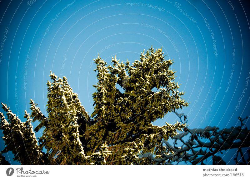 FROHEN 2. ADVENT Umwelt Natur Landschaft Pflanze Himmel Winter Schönes Wetter Eis Frost Schnee Baum Nadelbaum Tanne schön hoch Spitze kalt verschönern fällen
