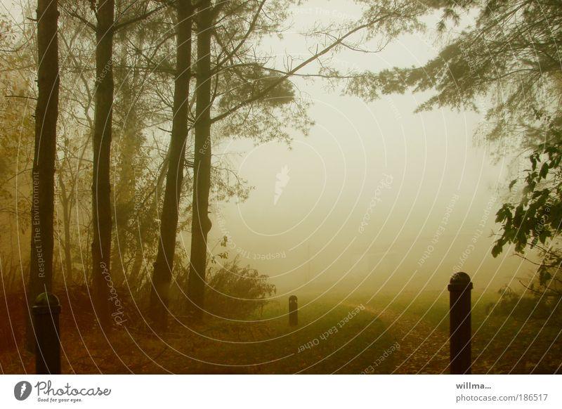 da wo der herbst aufhört... Natur Einsamkeit Wald Herbst Wege & Pfade Regen Landschaft Nebel Romantik Sehnsucht Barriere November Oktober September Poller