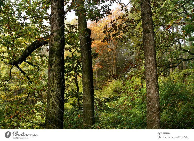 Benachbart Natur schön Baum grün ruhig Wald Leben Erholung träumen Wege & Pfade Luft Umwelt Zeit Horizont Perspektive Wachstum