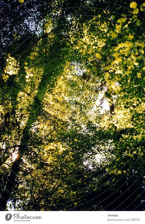 Blätterdecke Wald Baum Blatt Beleuchtung grün Wachstum Geäst Sommer Sonne Lichterscheinung Schatten Ast marqs