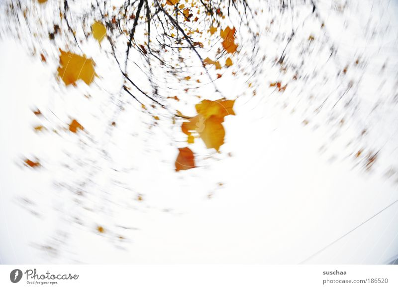 .. wie ein blatt im wind .. Natur Himmel Baum Blatt Herbst Bewegung Zufriedenheit Umwelt ästhetisch Klima Ast Drehung Farbfleck