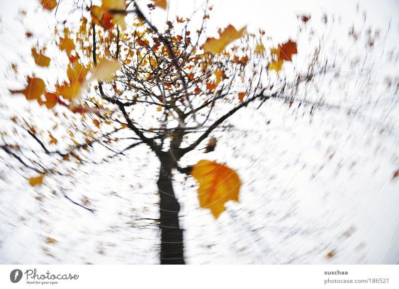 .. wie ein baum im wind .. Umwelt Natur Pflanze Urelemente Luft Himmel Herbst Baum Blatt Holz gelb gold Leben Klima Ast Bewegung Farbfoto Außenaufnahme