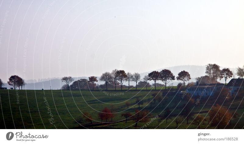 Herbst im Bergischen Land Umwelt Natur Landschaft Himmel Horizont Schönes Wetter Baum Gras Sträucher Wiese Feld dunkel Ferne braun grün weiß Stimmung Einsamkeit