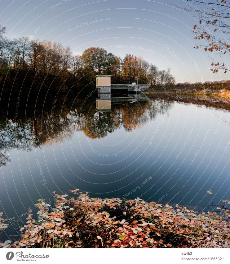 Am Damm Umwelt Natur Landschaft Pflanze Wolkenloser Himmel Horizont Herbst Klima Schönes Wetter Baum Gras Blatt Zweig Laubwald Herbstlaub Herbstfärbung Bauwerk
