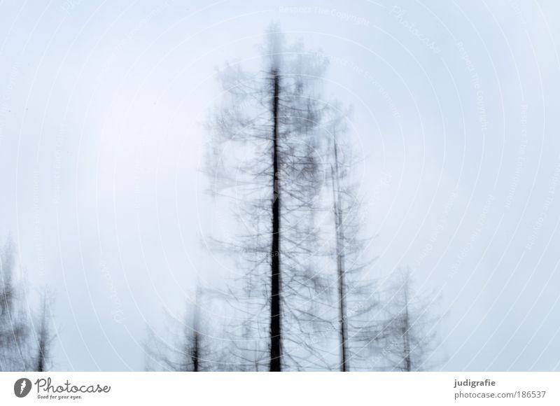 Nach oben Umwelt Natur Himmel Winter Baum Wald Bewegung fallen träumen Wachstum trist Geschwindigkeit kalt Klima Alptraum Dynamik kahl Außenaufnahme Experiment