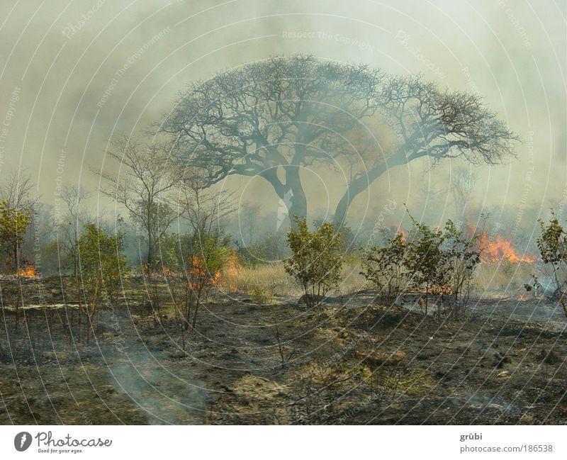 Buschbrand in Botswana Safari Landschaft Feuer Urwald Buschwald gefährlich Farbfoto Außenaufnahme Menschenleer Tag