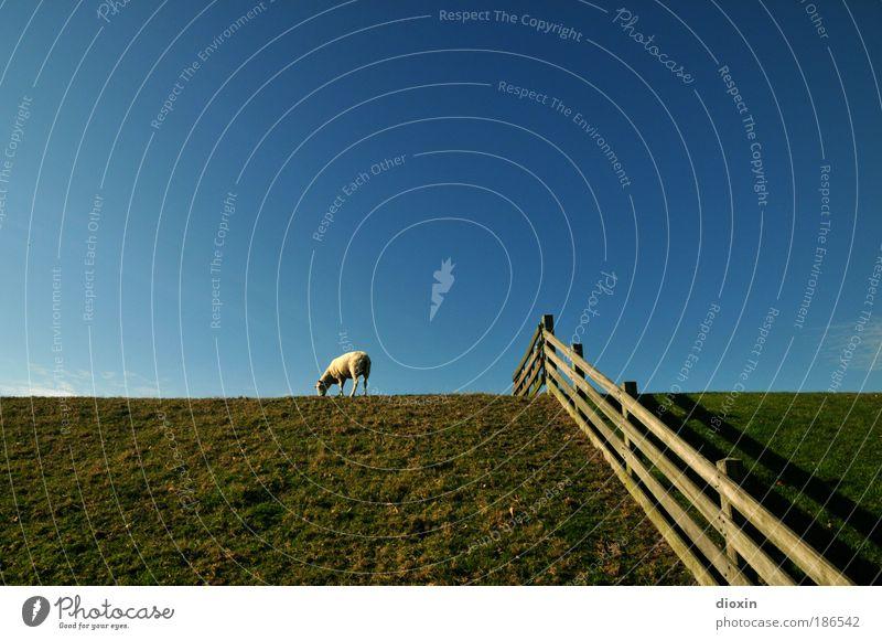 Der Deich lebt! Vol.2 Ferien & Urlaub & Reisen Tourismus Umwelt Natur Landschaft Pflanze Tier Himmel Wolkenloser Himmel Wetter Schönes Wetter Gras Wiese Küste